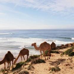 Surfea la ola más larga de Marruecos