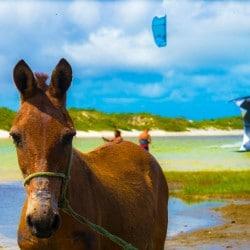 acaciones kitesurf en Brasil - Tribbuu
