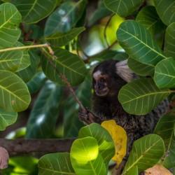 Vacaciones kitesurf en Brasil - fauna salvaje - Tribbuu