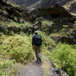 Trekking - Tenerife en modo Trekking - senderismo - Tribbuu